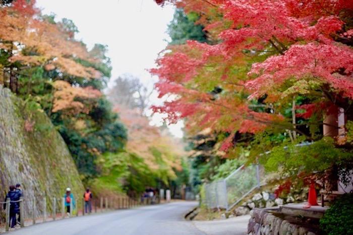 京都高台寺紅葉