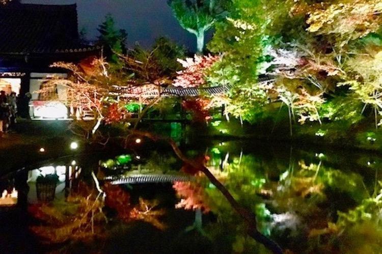 京都紅葉高台寺ライトアップ