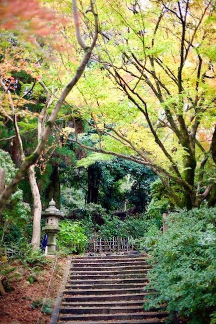 京都紅葉円山公園