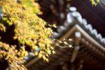 【京都紅葉】知恩院三門・美しい友禅苑の夜間ライトアップ詳細情報&レビュー